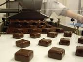 A dozen dipped chocolate squares come off of the production line.