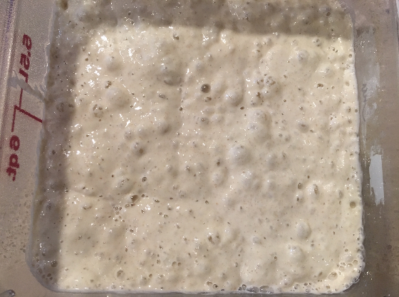 Well fed sourdough starter showing bubbles