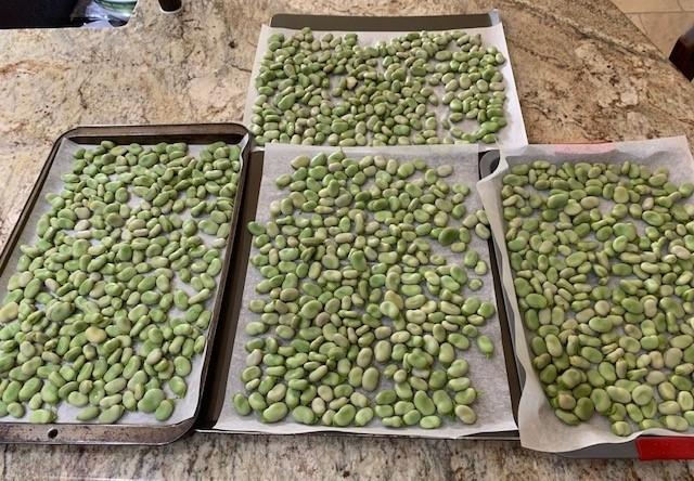 Beans on Freezing Trays