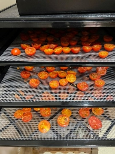 small red tomatoes cut in half and prepared on dehydrator trays