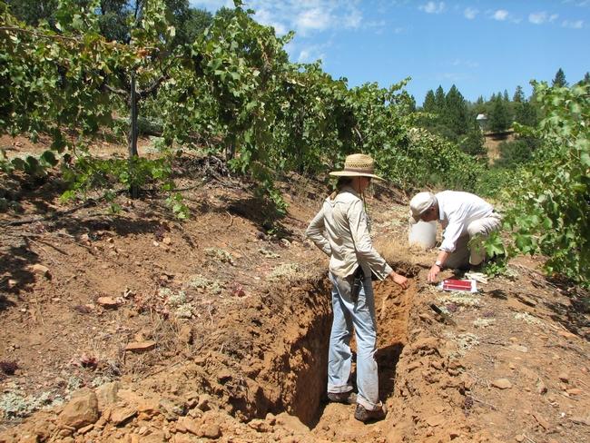 A soil pit.