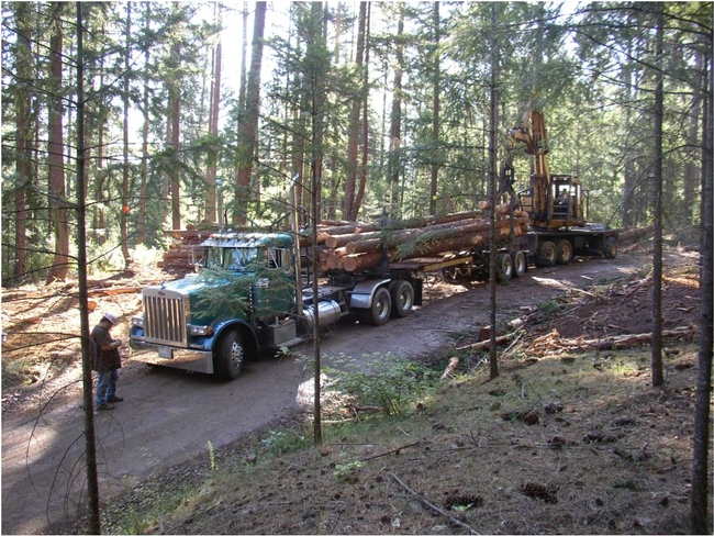 Logging in the Weaverville Community Forest