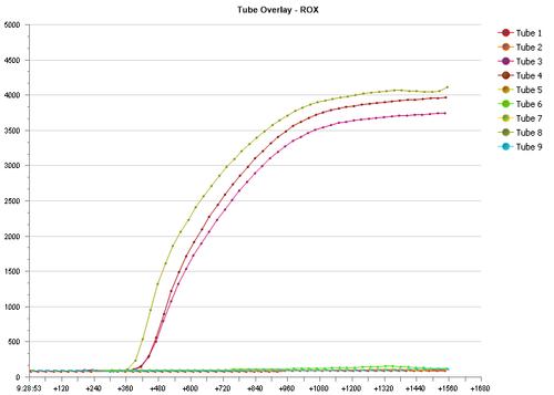 Foto 6: En los resultados generados por computadora, muestras positivas por podrición de Phytophthora (barra roja) aparecerá como líneas curvas que se mueve hacia arriba, por la otra mano muestras negativas (barra azul) por el patógeno aparecerán como líneas rectas sin movimiento hacia arriba.