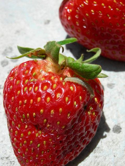 Enrollador de hoja con alta posibilidad de ser LBAM emergiendo del caliz de la fruta.