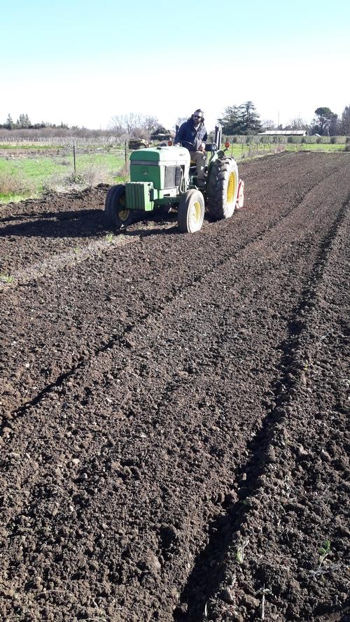 Tractor circulando a través del campo experimental infestado con Fusarium oxysporum f. sp. lactucae.