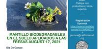 BDM-Demonstration-Flyer Spanish for Fresas y Moras Blog