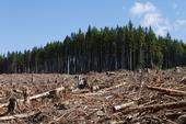 logging istock photo