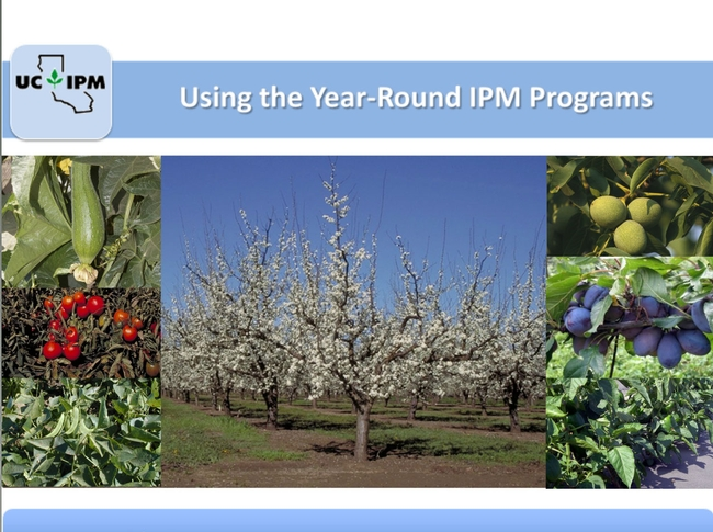Year-round IPM ensure effective pest control with least harm to the natural environment.