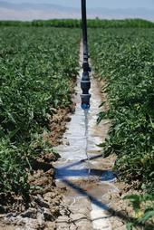 Overhead irrigation can help save water on farms.