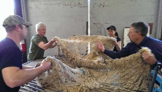 Wool classing.
