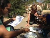 California Naturalists study invertebrates for a citizen science project.
