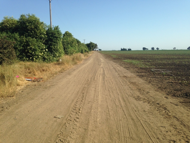 Hedgerow planted in northern Yolo County, CA.
