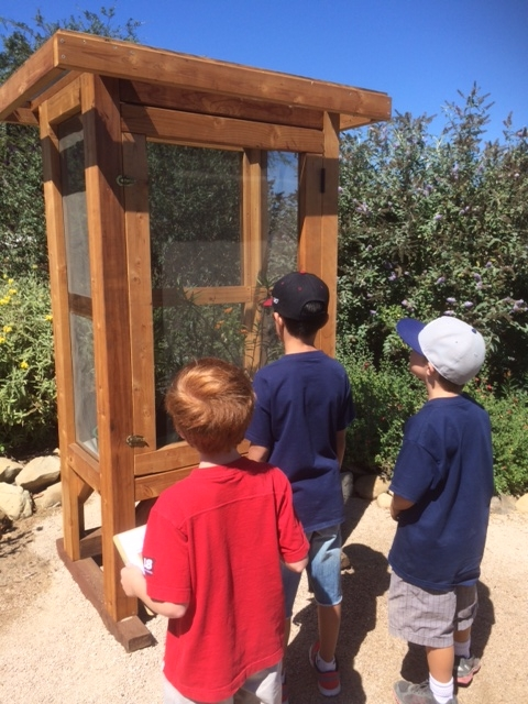 Student  stop to observe caterpillars in action