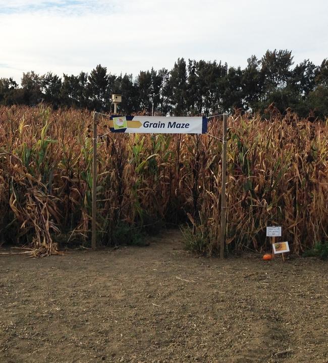 Grain Maze
