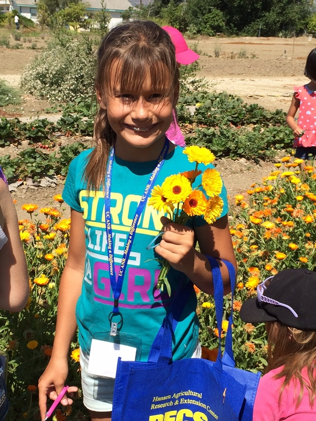 Harvesting flowers to take home
