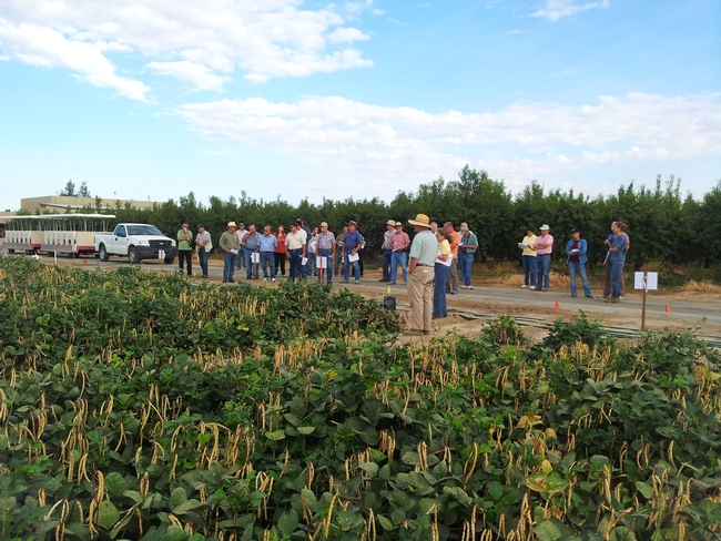 Dry bean meeting attendees learning about the impact of subsurface drip irrigation on crop health and yield.
