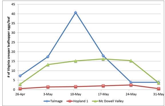 VCLH eggs per leaf 5 31