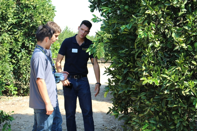 Joshua Reger explained citrus research to students in the field.
