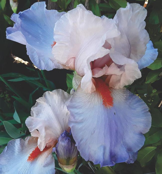 soft blue white