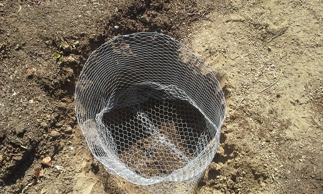 gopher wire in place