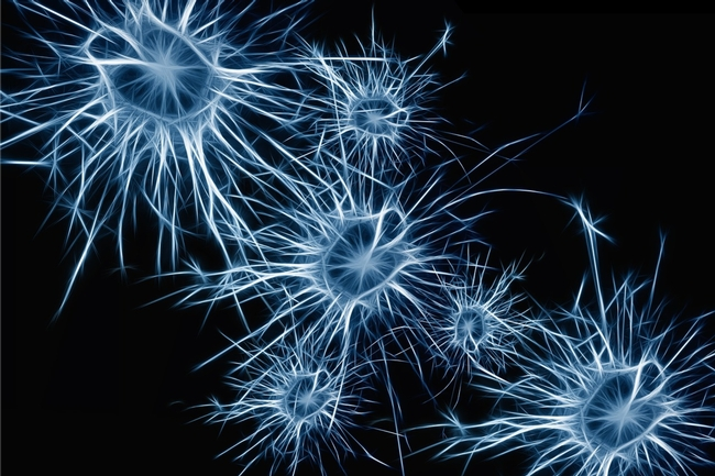 Neurons in the human brain