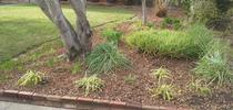 Leaves left in landscape for Spill the Beans Blog