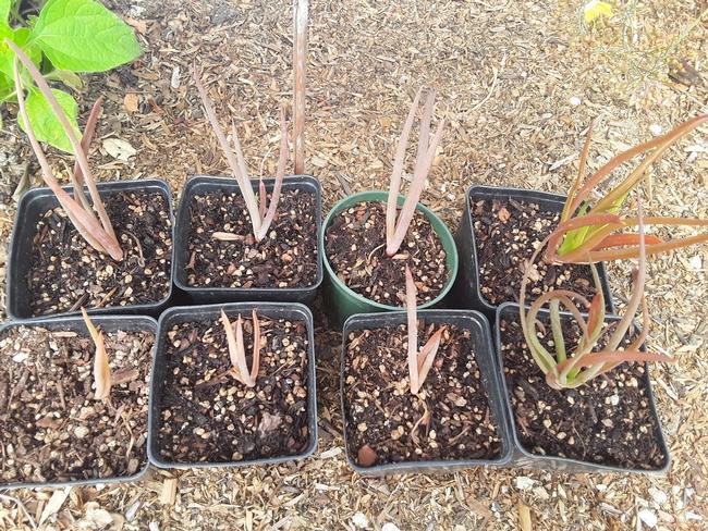 Plants self propagate, seedlings in 4