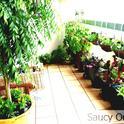 Even a balcony can have a riotous garden. (Saucy Onion)