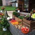 Farmstand (Sweet 16 Farm)