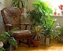 indoorgardening1