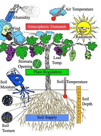 plantregulation