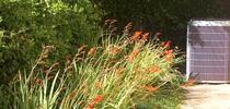 APRIL 4side yard pontentilla for Napa Master Gardener Column Blog