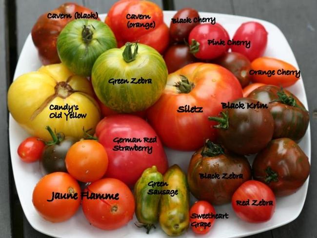 Blog, tomato colors