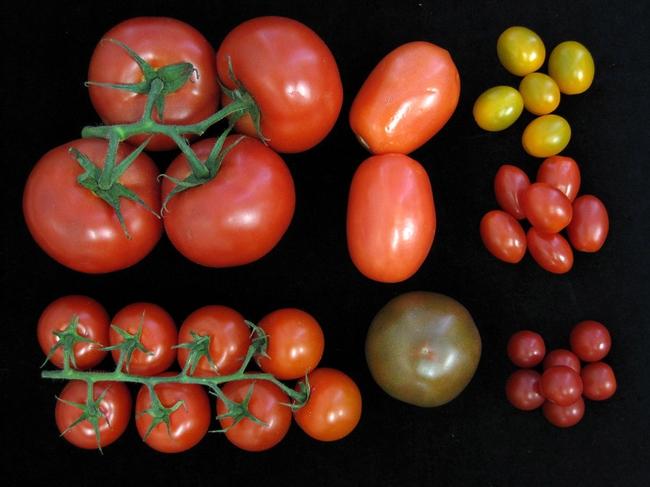 Blog, tomato colors2