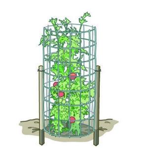 Blog, tomato-cage