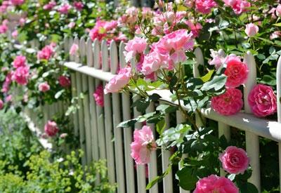 Blog, rose-garden