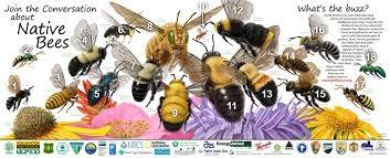 Blog, roses bees