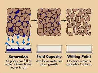 Blog, BETTER SOIL  Stages of Water Holding Capacity