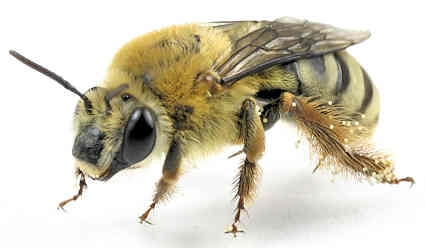 Blog, squash bee 3