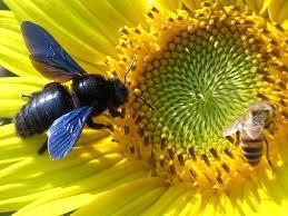 Blog, bumblebee 2