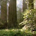Blog, Redwood grove