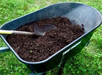 Blog, compost