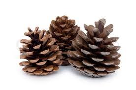 Blog, pine cones