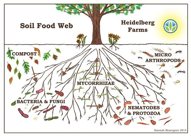 Blog, mycorrhizae 3