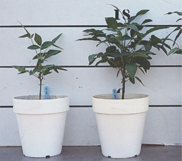 Blog, mycorrhizae 2