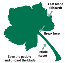 Petiole info for petiole sampling.  Take 30 to 50 from vines all over the vineyard.
