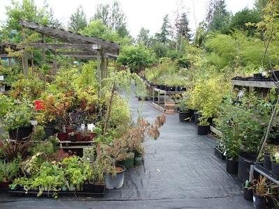 Blog, plant nursery