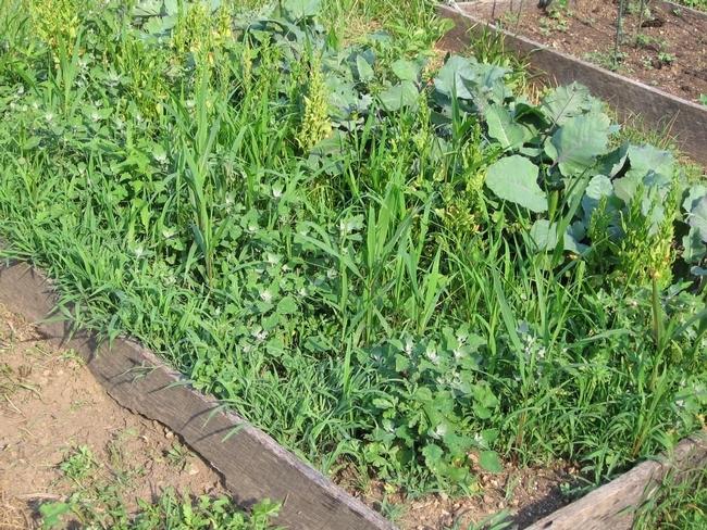 Blog, weedy garden