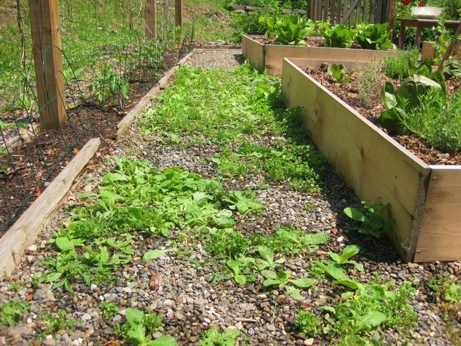 Blog, weeds