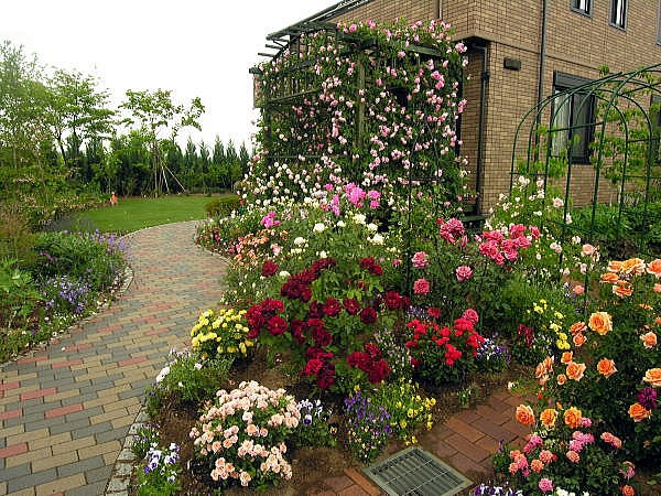 With just a few gardening activities, your roses can look like these!